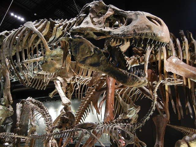 ティラノティラノサウルス