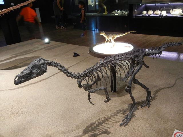 ラプトル化石