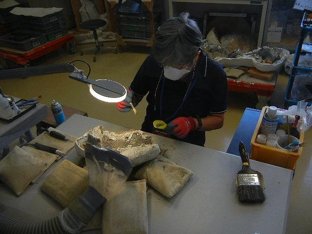化石の採掘